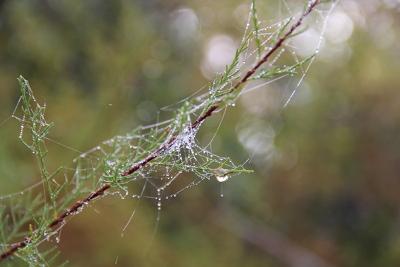 Perlen in den Busch gehängt