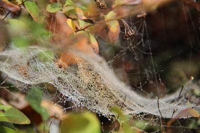 Ein kleiner Regenbogen im Spinnennetz