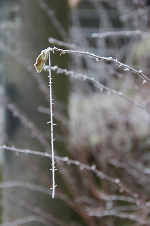 Kein abgeknickter Ast, sondern eine bereifte Spinnwebe hängt da.