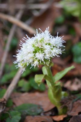 Was das wohl für eine Waldblume sein mag? Fotografiert von Bernd & Iris