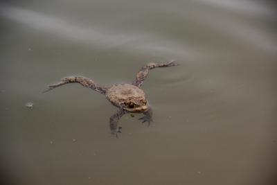 Nach der ganzen Anstrengung kann man auch einfach mal im Wasser abhängen.