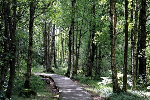 Der Moorlehrpfad für sicher über einen Weg aus Holzbohlen.