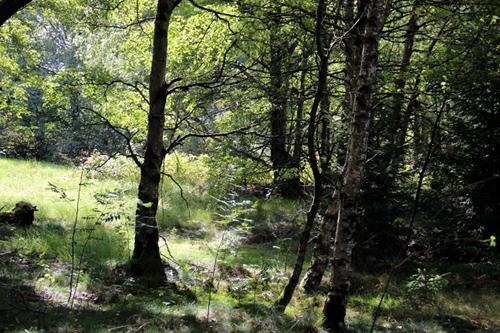 Typisch für ein Moor: der Karpatenbrikenwald