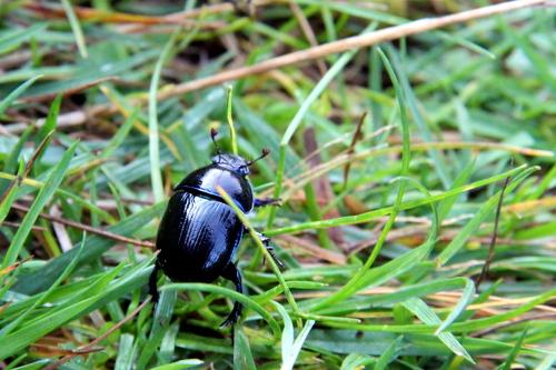 Hier verschwindet er schnell wieder im Gras, nachdem er über den Weg getragen wurde.