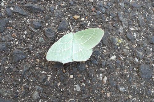 Ein Grünes Blatt auf dem Weg.