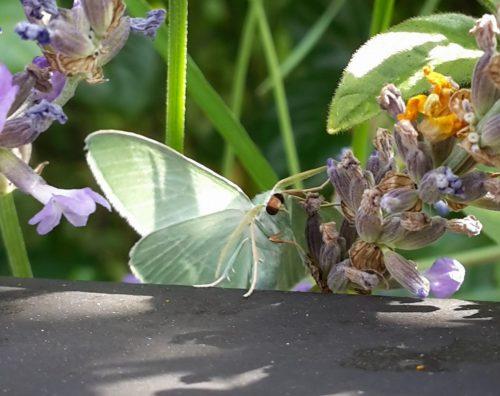 Auch Schmetterlinge können niedlich gucken, oder?