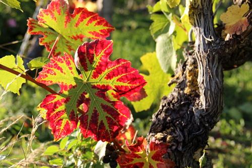 Herbst liegt in der Luft