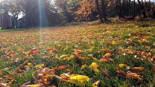 Letzte Woche kleidete das bunte Kirschlaub im Sonnenschein die Streuobstwiesen noch in herbstliche Farben.